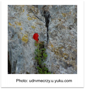Red Flower growing in a rock