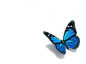 BlueButterfly_small