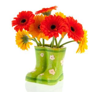 Gerber flowers in green boots